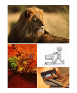 administrador fincas leon